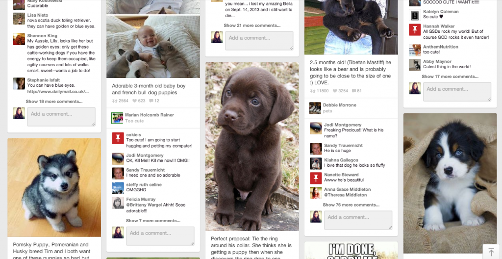 pinterest-puppies-2