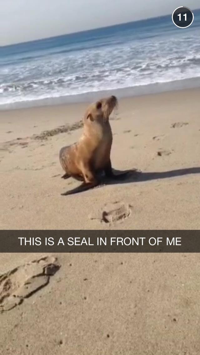 seal-snapchat-story