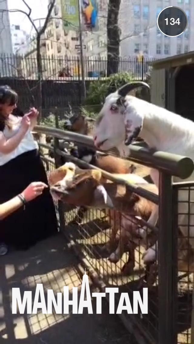 goat-nyc-snapchat-story