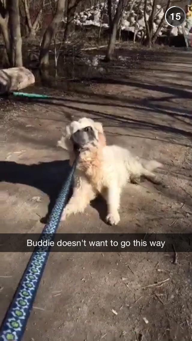 dog-toronto-life-snapchat-story