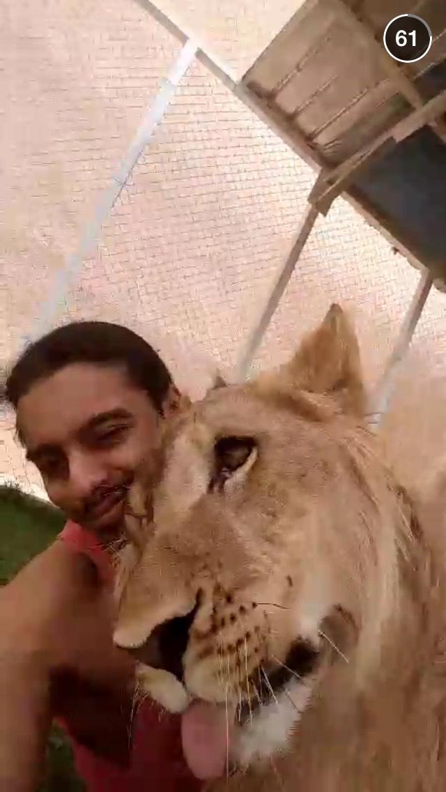 riyadh-life-snapchat-story-tiger