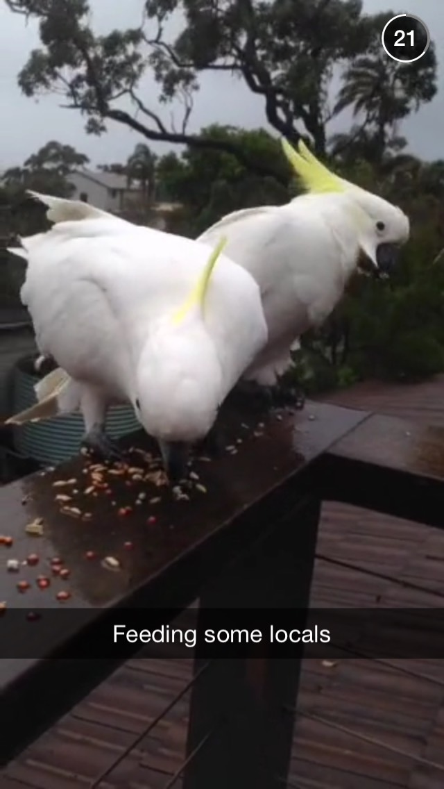 sydney-life-birds-snapchat-story