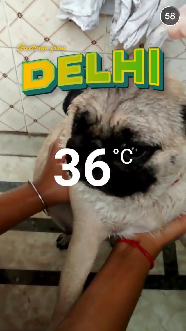 pug-delhi-life-snapchat-story