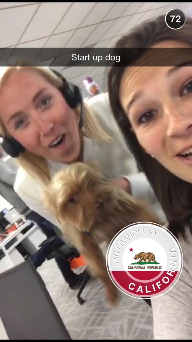 startup-dog-snapchat-story