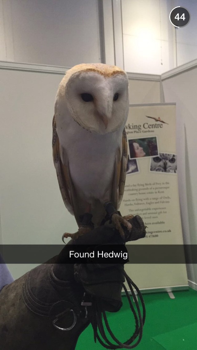 hedwig-owl-london-pet-show-snapchat