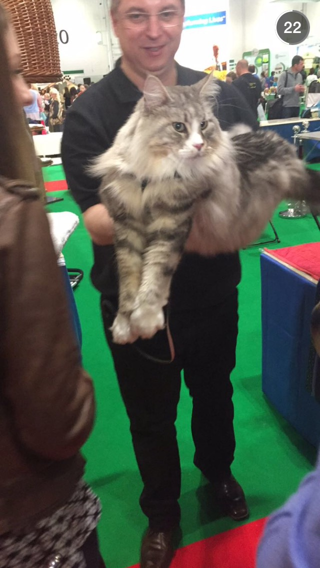 big-cat-london-pet-show-snapchat