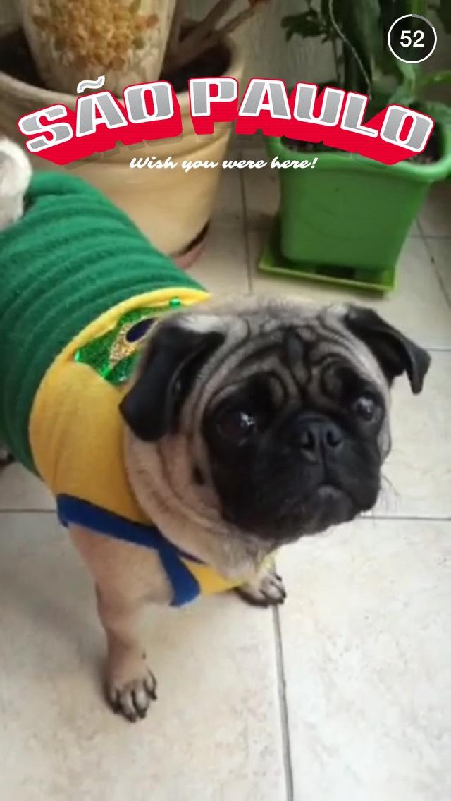 sao-paulo-dog-snapchat