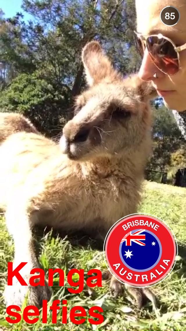 kangaroo-snapchat-story-brisbane
