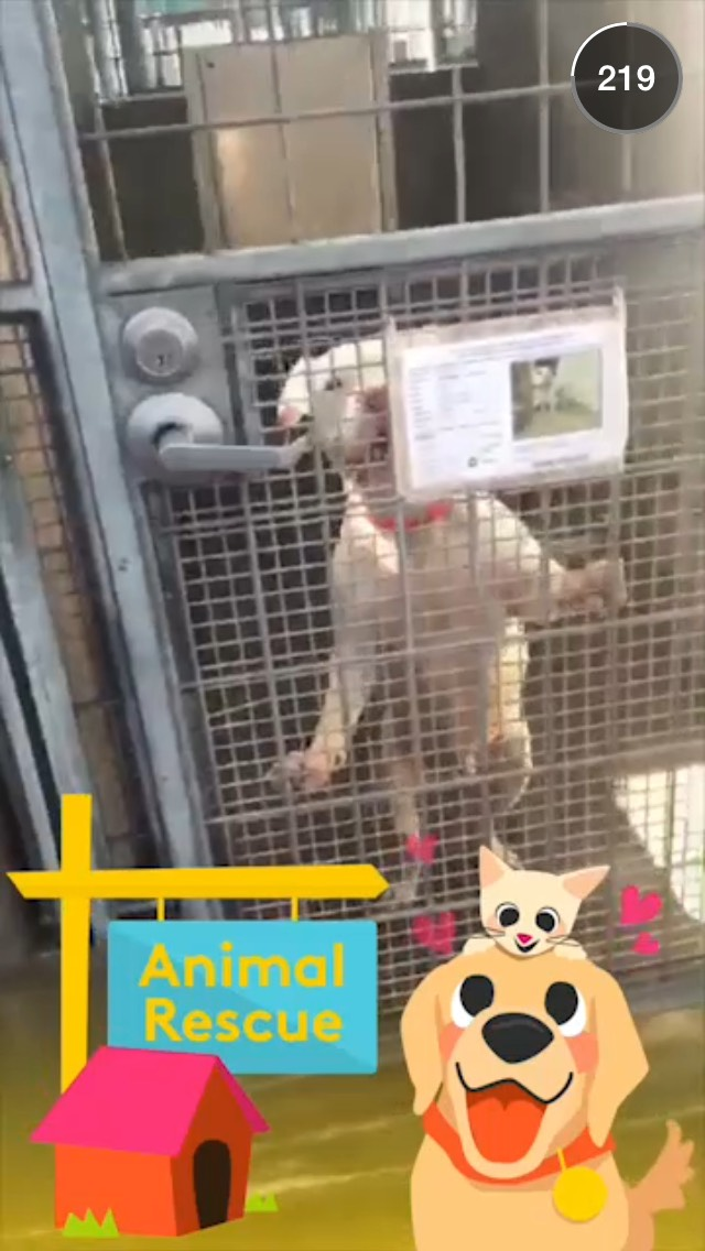 animal-rescue-snapchat-story