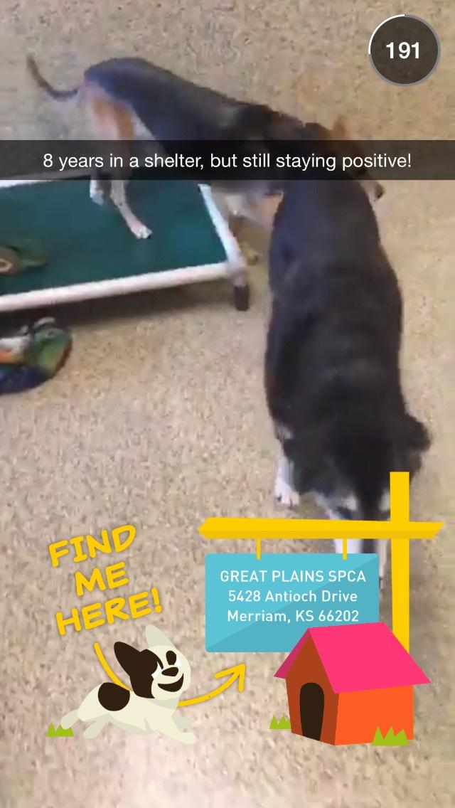 snapchat-story-animal-rescue