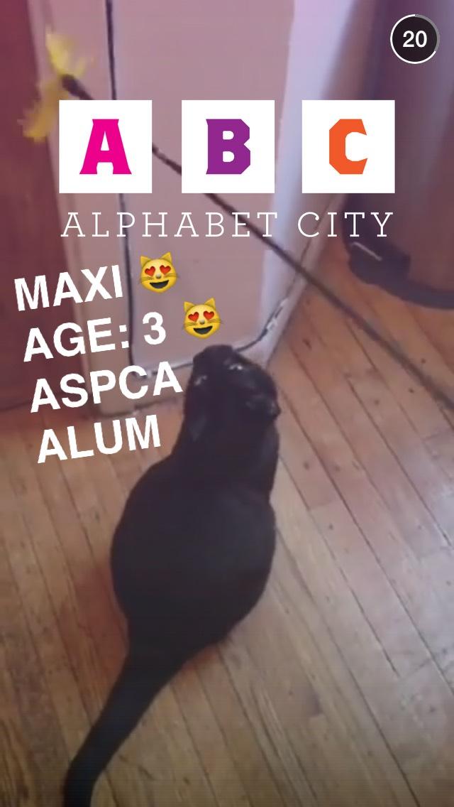 maxi-cat-animal-rescue-snapchat-story
