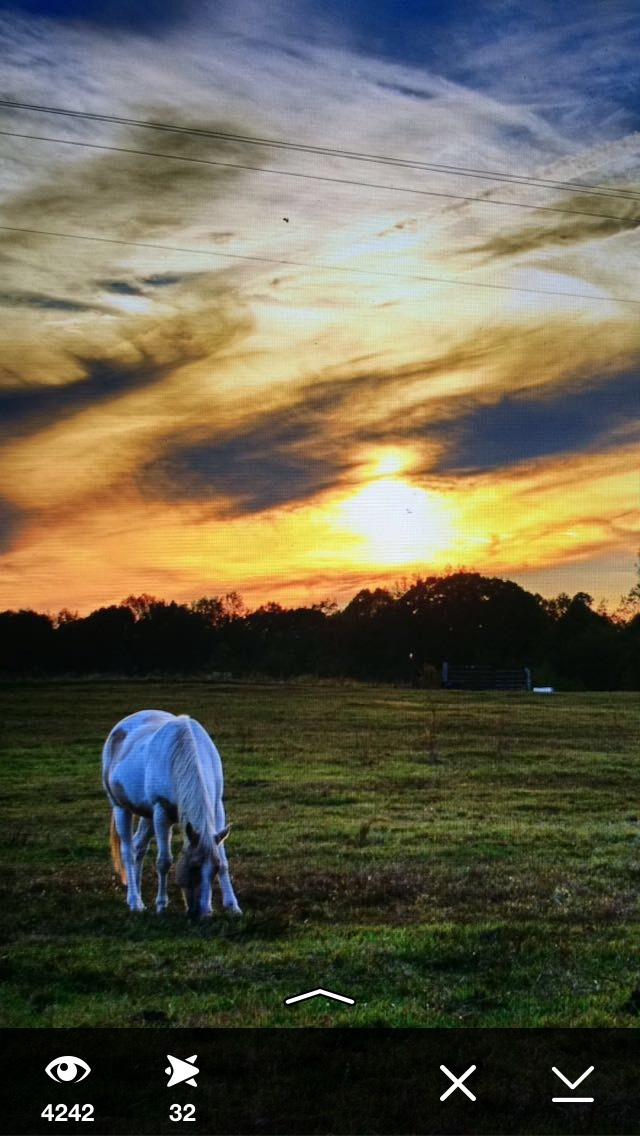 hdr-photography-horse-snapchat