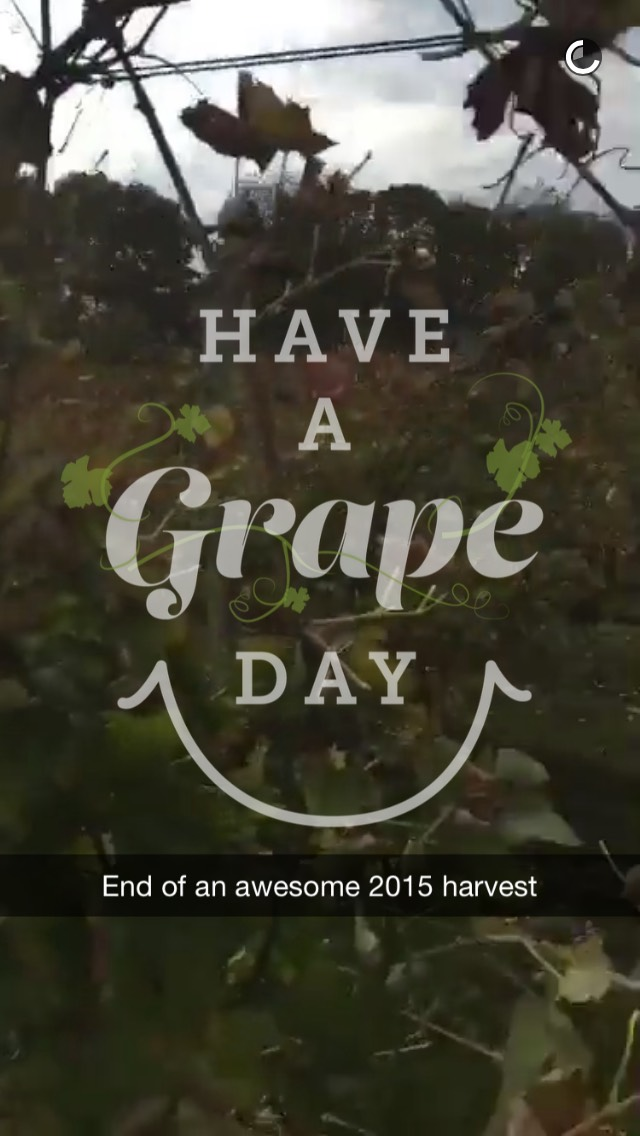 grape-wine-snapchat-story