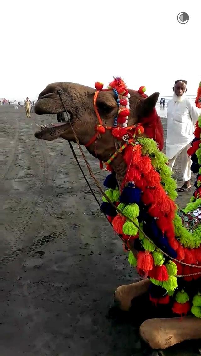 camel-karachi-snapchat-story