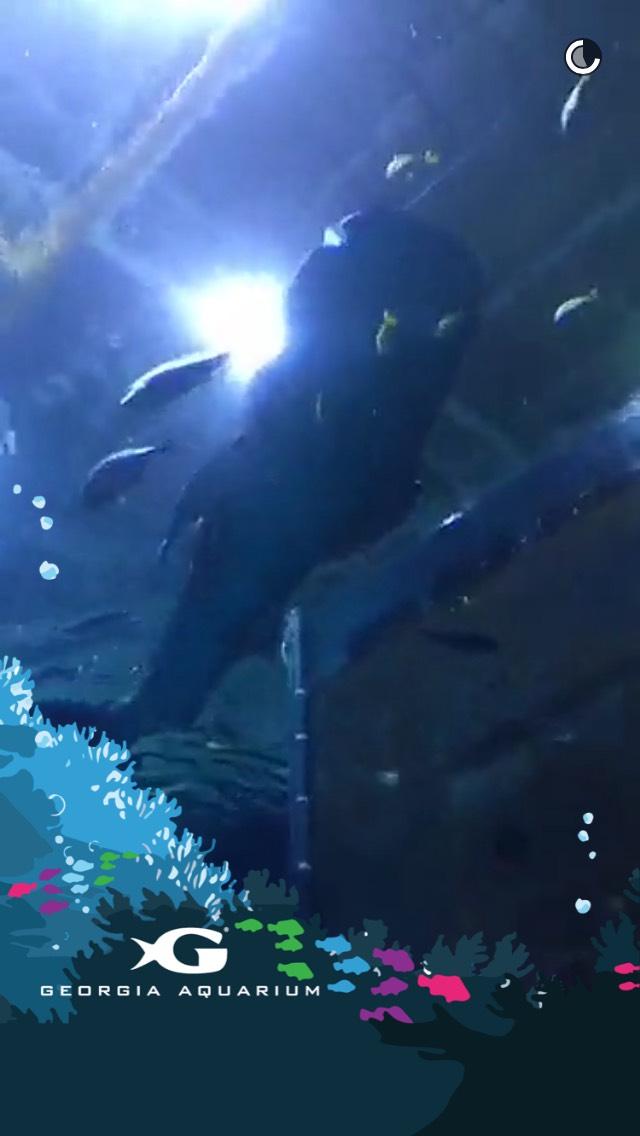 georgia-aquarium-snapchat-story
