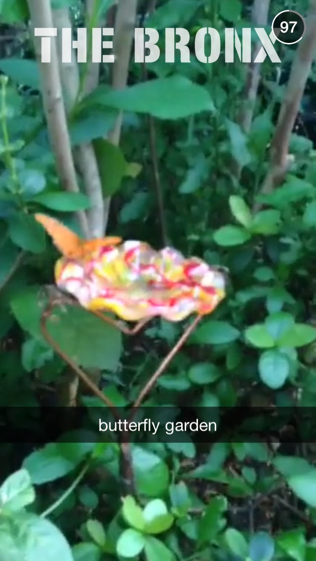 butterfly-earth-day-snapchat-story