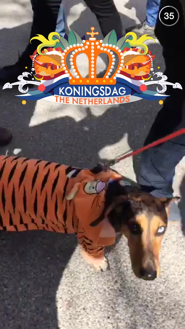 kings-day-dog-snapchat-story