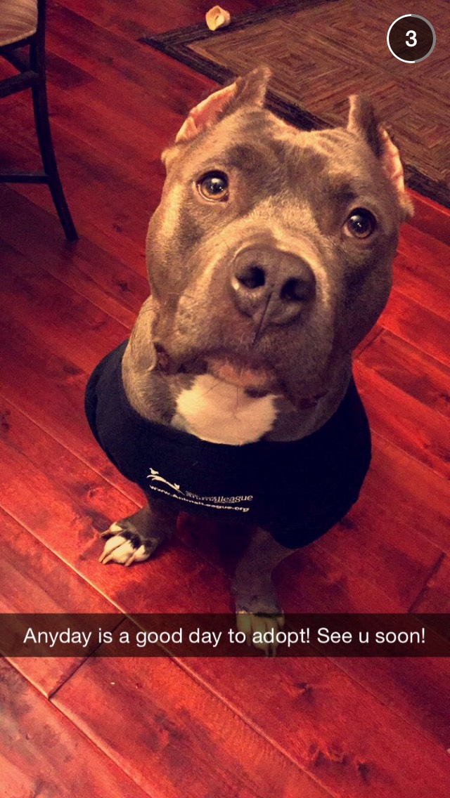 dog-animal-rescue-snapchat-story